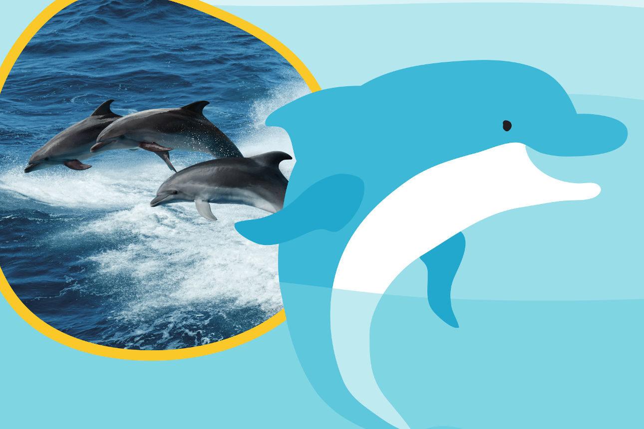 Les dauphins, nageurs fûtés