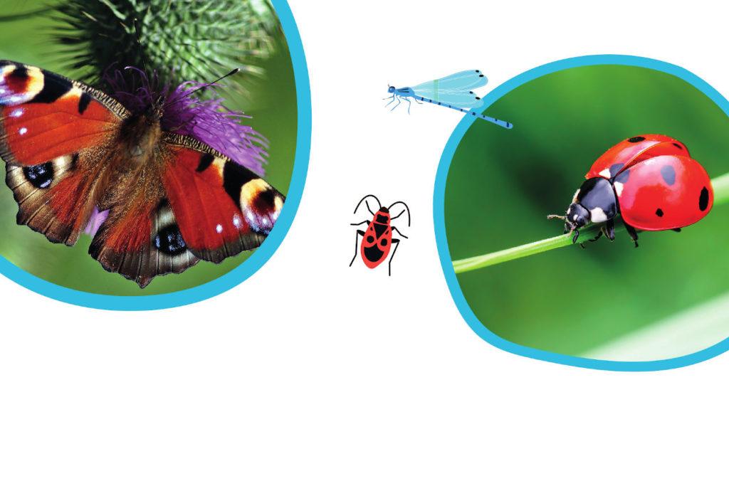Insectes sous la loupe