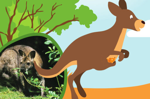 Les kangourous, champions de saut